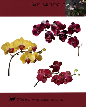 Differrent orchids by Csyyt