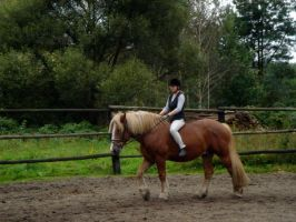 Stock 139: cold-blood horse 2 by AlzirrSwanheartStock