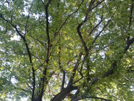 The Trees and Me - Garden - 2012-31 by Kay-March