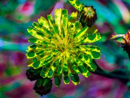 Green on Yellow by Mackingster