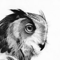 Eagle-Owl Portrait by LittleFlashes