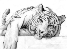 Relaxing Tiger by dymira128