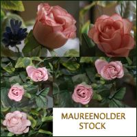 STOCK PHOTO rose pk by MaureenOlder