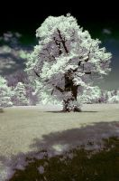 infrared english garden by mrrossi