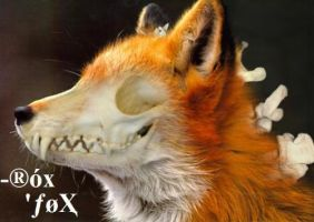 Skeleton Fox by Clip-Slide