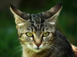 Micka the cat by alennzg