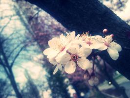Spring. by Arina02