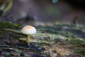 Lonely little mushroom by woodfaery