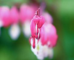 Bleeding Heart II by Lithium-Shadows