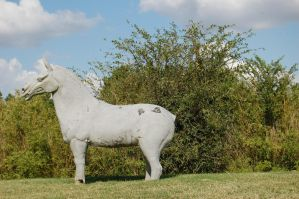 Chinese horse statue by katiezstock