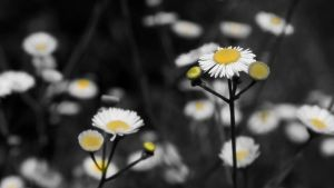 Black White And Yellow by RyoThorn