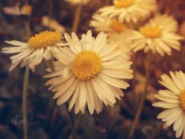 Spring by anasoriano