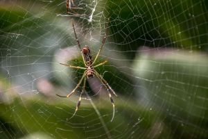Spider 02 by DiSanchezPhotos