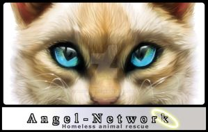 Angel Network by Foxbat-Sullavin