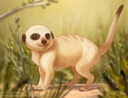 Little Meerkat by LCibos
