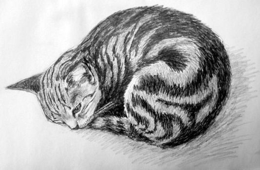 Study of a Curled Tabby Cat by nicanfhilidh