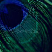 Peacock by NanaPHOTOGRAPHY