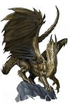 Young Gold Dragon by BenWootten