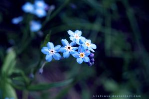 Forget me not by L0stLove