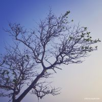 life like a tree by Sugantenk