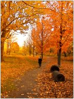 Colors of Fall by Jack-Nobre