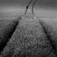 theFieldOf... by anapt