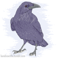 Raven by bensigas
