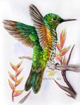 Study of a Rufous-Tailed Hummingbird by Primal-Arc