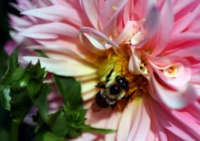 Busy Bee by AngelsOdyssey