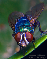 Housefly on the house 9 by lee-sutil
