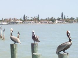 Pelican2 by ownpersonalhell