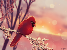 Cardinal in the sunrise. by Simjim91