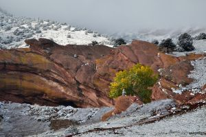 Autumn Gold and Red Rocks by mttomimages