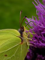 Butterfly Beauty VI by Photopathica