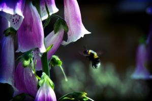 Bumble Bee by Haxonite