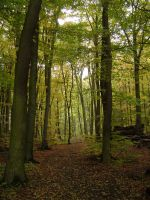 wood path by iscott
