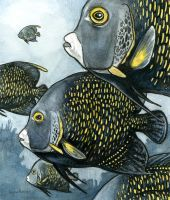 French Angelfish by AnnPars