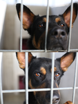 East Valley Animal Shelter 28 by Deliquesce-Flux