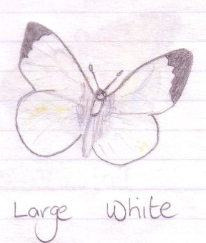 Large White by NixxyB