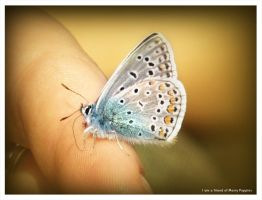 I am a friend of Marry Poppins by norne-nornir