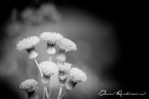 Flowers.. by danniibooy