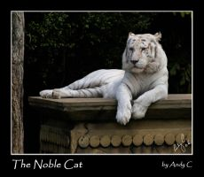 The Noble Cat by 2Stupid2Duck