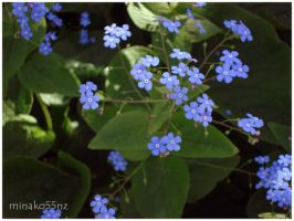 Tiny Blue by minako55nz