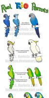 Real RIO Parrots by Lintunen