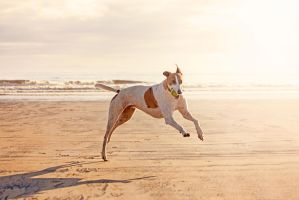 Murc the Greyhound by akrPhotography