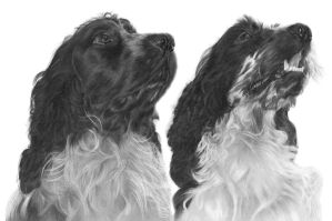 Commission - 2 Spaniels by Captured-In-Pencil