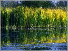 Yellowish reed by Alissia666