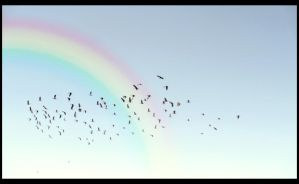 Birds fly over the rainbow by apartyintheUSA