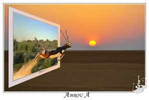Escaping to freedom by AMROU-A