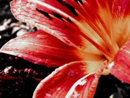 Passion Flower by Morna